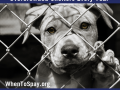 10 Million Homeless Animals Enter Overcrowded Shelters Every Year